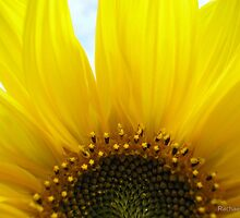 Sunny Side Up by Rachael Evans