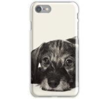 Cute Puppy dachshund iPhone Case/Skin