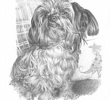 Yorkie on a Christmas couch drawing by Mike Theuer
