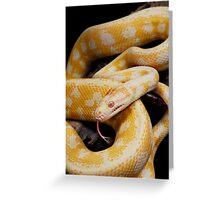 Albino Northern Territory Carpet Python (Morelia spilota variegata) Greeting Card