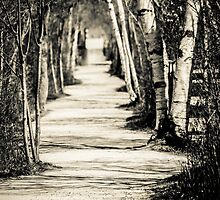 path under the trees by Denis Charbonnier