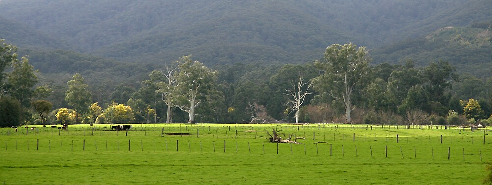 How Green is My Yarra Valley by Julie Bird