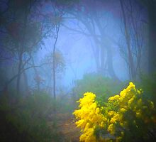Wattle In The Fog by Deirdreb