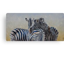 360 Degree Zebras Canvas Print
