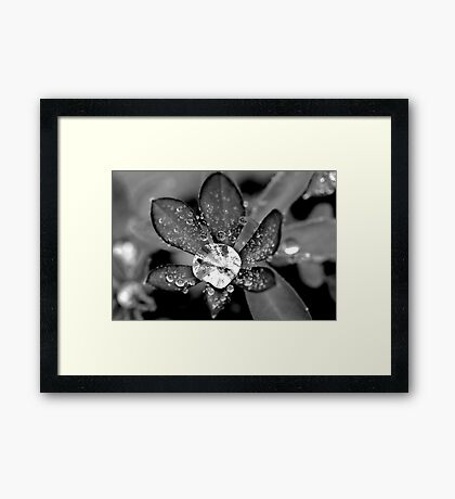 Lupin Diamond Framed Print