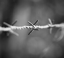 Barbed Wire in Corindi Beach, New South Wales by groophics