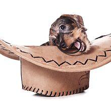Cute funny Puppy dachshund by utekhina