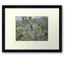 lichen on blueberry Framed Print