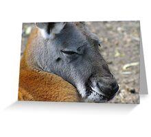 Big Red Kangaroo Greeting Card
