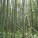 Bamboo by Paul Coia