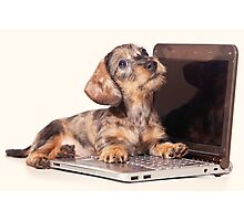 Cute Funny dachshund puppy Photographic Print
