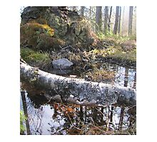 magic forest from Sweden Photographic Print