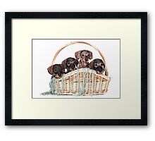 Four dachshund puppy in a basket Framed Print