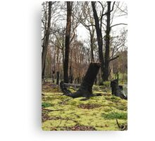 Moss regenerating six months on Canvas Print