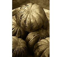 Pumpkins (Sepia) Photographic Print