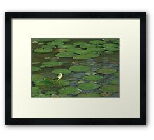 Lily Pads in Vietnam Framed Print