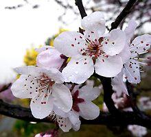 First Flowers of Spring by Selene Samuelsson