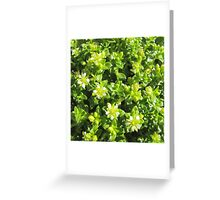 Small flowers in the forest Greeting Card