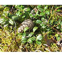 Nature works Photographic Print