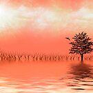 Natures Balance by Kimberly Palmer
