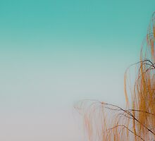 Orange&Green - extraordinary world by Stefano Bergomas