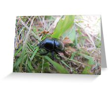 Beetle on the forest hike Greeting Card