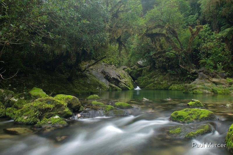 Crystal pool at the Riwaka Resurgence by Paul Mercer