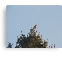Bird at the top of the tree Canvas Print