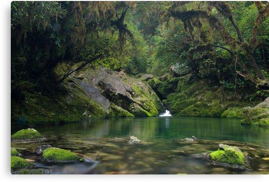 The Crystal Pool at the Riwaka Resurgence by Paul Mercer