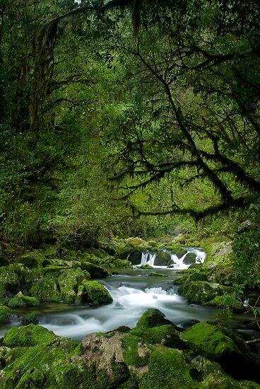 Riwaka River by Paul Mercer