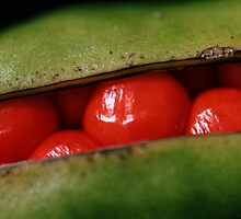 Redbean [ shot as seen] by Tenee Attoh