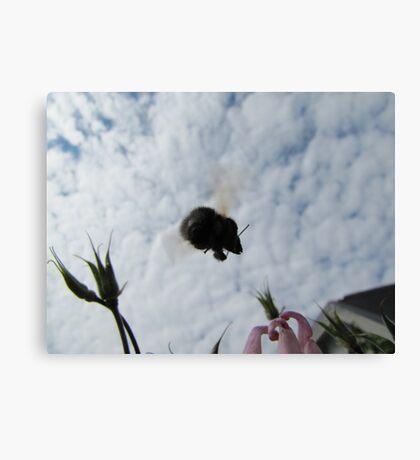 Flying bumblebee Canvas Print