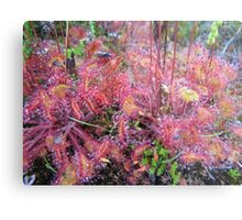 Carnivorous Plants =  fly eating Metal Print