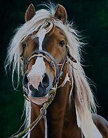 Vanner Spirit by Pauline Sharp