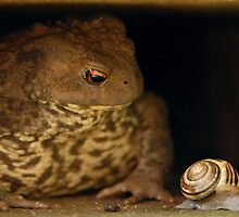 Oden the Toad by vanStaffs