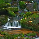 MOSSY MOUNTAIN STREAM by Chuck Wickham