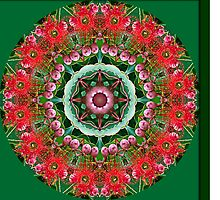 Flowering Gum Mandala by haymelter