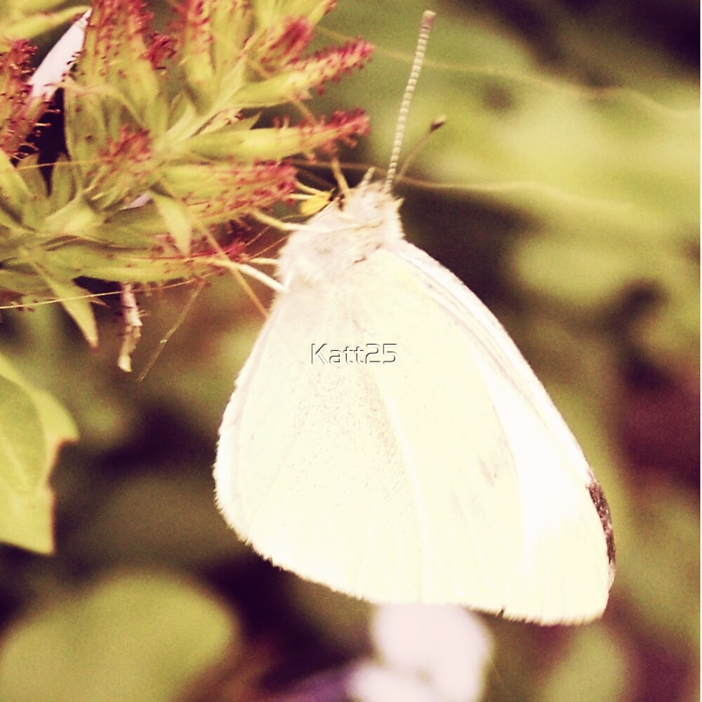 The White Flutterbye. by Katt25