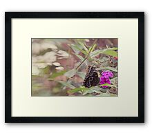 Another pretty butterfly Framed Print