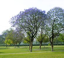JACARANDA TREE by A P Singh