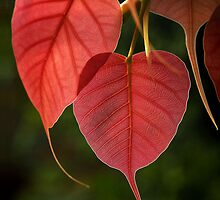 HEARTS by A P Singh