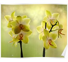New Orchids in Nice Light Poster