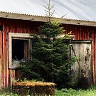 20.5.2015: Well, Spruce and Cowshed by Petri Volanen