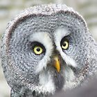 owl like  by Gillian  Goodwin