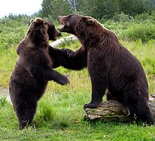Dancing Bears - Kenai Peninsula, Alaska by kennethworstell
