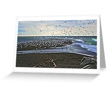 Gull Point Greeting Card