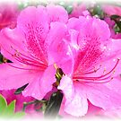Pink Azalea by MistyHatten