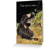 Bear-y Content! Greeting Card