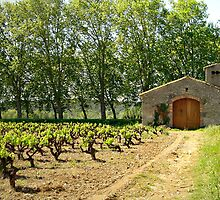 Vineyard at Argen Minervois by triciamary