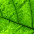 Veins of Green by Brian Downs